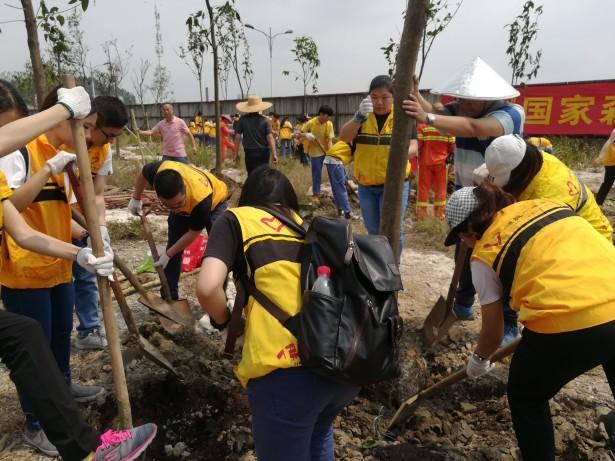 五四青年节,禅青社工种下禅青树